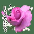 変更可能な丁寧な言葉にバラの花を添えて