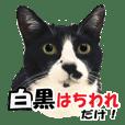 はちわれ猫の日常会話スタンプ(2)