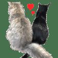 Atelier cats Saku and Mitsuki