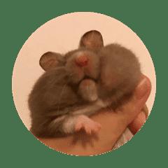 Kii Phoon The Hamster.