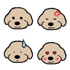 Toy Poodle Named Apollon