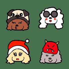Toy poodle community
