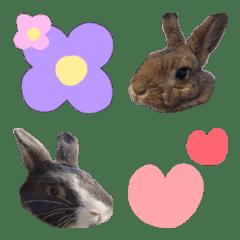 อีโมจิ Rabbit Emoji !