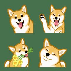 柴犬(狗)