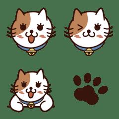 Care-free Cat