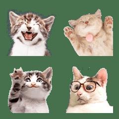Smiling face cats Emoji
