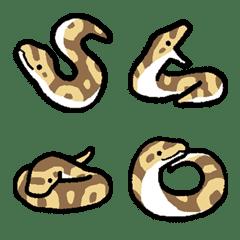 Cute python