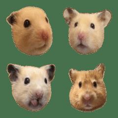 可愛的鼠鼠標情包(多多and寶寶鼠の日常)