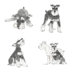 Miniature Schnauzer - Salt and Pepper
