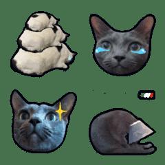 Cute cats Rookii's Fam1