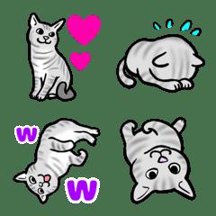 American Shorthair Cat Emoji