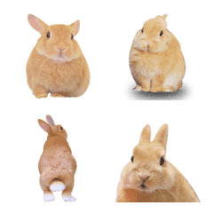 Photo!Usable rabbit Emoji.