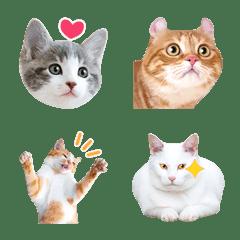 Cute cats photo EMOJI