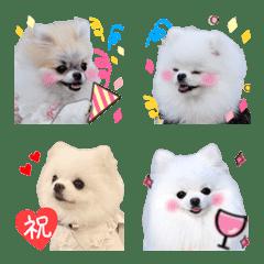 อิโมจิไลน์ Pomeranian.Emoji