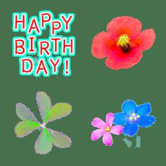อิโมจิไลน์ congratulations with little flowers