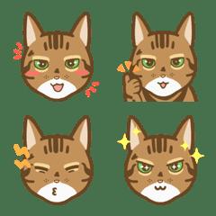 cute bengal cat