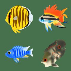 Cichlid tropical fish