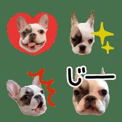 French bulldog BOOO