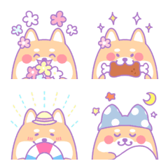 Dreamy and very cute Shiba Inu