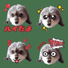 Dappu Rui Emoji