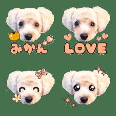 Maltipoo Mikan Emoji