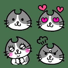 Adorable bicolor cats
