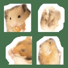 Lovely hamster Chan Emoji
