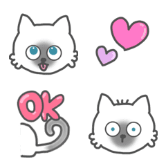ragdoll cat kitty