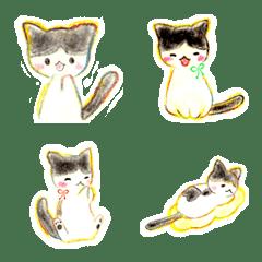 cute cat Hime-chan