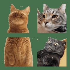 你好,貓 ☆ 喵星人 日常表情貼