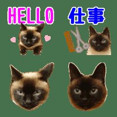 อิโมจิไลน์ DAN-chan Emoji
