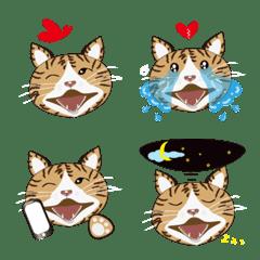 jessie cat no-2